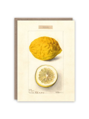 The Pattern Book Lemon Card